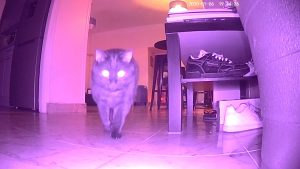 Chat vision infrarouge